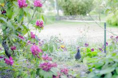 Bird and flora by Stephen Topp on 500px