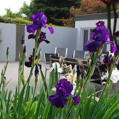 Villa tuin met basalt en aluminium   Hoveniersbedrijf de Ginkgo