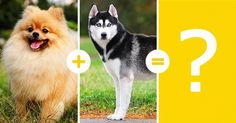 14 cachorros lindinhos que são resultados de cruzamentos pouco comuns