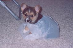 Baby Millie: http://www.kwch.com/news/local-news/millie-the-weather-dog-through-the-years/22215326