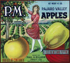 PM Pajaro Valley Brand Apple Label, Watsonville, California