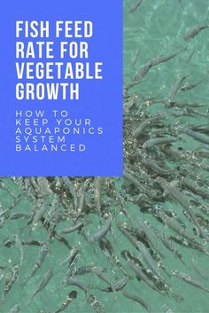 The nutrients in aquaponics systems are organically bound and cannot be checked the same way as a hydroponic system.  In this article, we cover off the fish feed rate for a balanced aquaponics system.