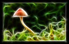fractal mushrooms | Blue Magic Mushrooms
