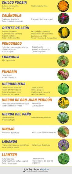44 Plantas Medicinales, Para Qué Sirven y Como Cultivarlas