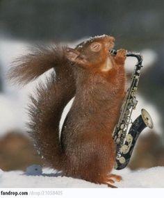 Saxophone Kenny G Squirrel #funny #lol