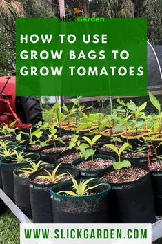 Method Of Growing Tomatoes In Grow Bags. - Method Of Growing Tomatoes In Grow Bags. There are two ways you can grow tomatoes in Grow Bags. Either you buy some good king of grow bags or you can . Container Gardening Vegetables, Planting Vegetables, Organic Vegetables, Vegetable Gardening, Bucket Gardening, Garden Container, Organic Herbs, Growing Vegetables In Containers, Plant Containers