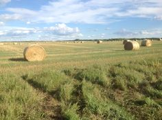 Near Lloydminster, Sask. Saskatchewan Canada, September