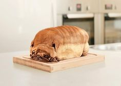 Is It A Dog Or A Loaf Of Bread? http://techmash.co.uk/2013/10/15/is-it-a-dog-or-a-loaf-of-bread/