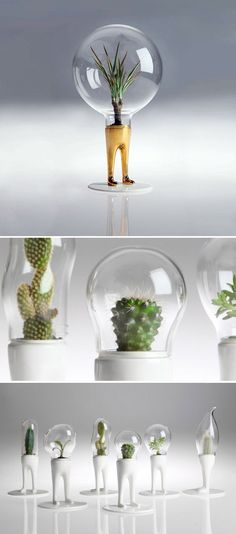 Cool but expensive. Domsai domed plant with legs. Each dome is individually blown to fit the plant, no two are the same. Air Plants, Potted Plants, Indoor Plants, Indoor Garden, Home And Garden, Plantas Bonsai, Decoration Plante, Deco Floral, 3d Prints