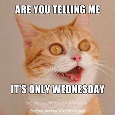 Funny Wednesday Memes, Happy Wednesday Quotes, Good Wednesday, Hump Day Quotes, Good Day Quotes, Cat Quotes, Humor Quotes, Life Quotes, Tgif