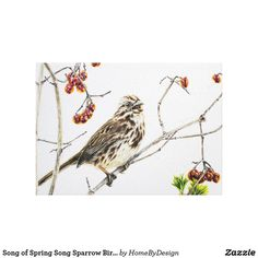 Song of Spring Song Sparrow Bird Art Canvas