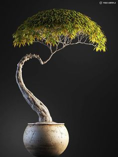 Houseplants That Filter the Air We Breathe Bonsai Tree - Buy Bonsai Tree, Bonsai Tree Care, Bonsai Tree Types, Bonsai Trees, Plantas Bonsai, Bonsai Forest, Bonsai Garden, Succulents Garden, Ficus