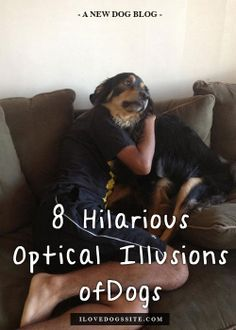8 Hilarious Optical Illusions of Dogs http://theilovedogssite.com/8-dog-optical-illusions-that-will-blow-your-mind/