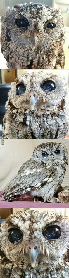 Meet Zeus : The Owl With Eyes Like The Night Sky