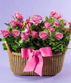 Tagged - My Comments Pretty Flowers, Baby Photos, Good Morning, Lunch Box, Basket, Roses, Google, Flower Arrangements, Floral Arrangements