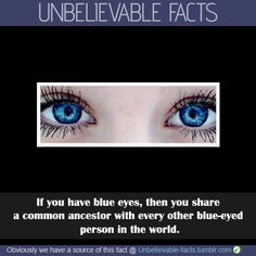 New research shows that people with blue eyes have a single, common ancestor. A team at the University of Copenhagen have tracked down a genetic mutation which took place years ago and is the cause of the eye colour of all blue-eyed humans alive Blue Eye Facts, Facts About Blue Eyes, Quotes About Blue Eyes, Green Eyes Facts, Eye Color Facts, People With Green Eyes, Wtf Fun Facts, Random Facts, Crazy Facts
