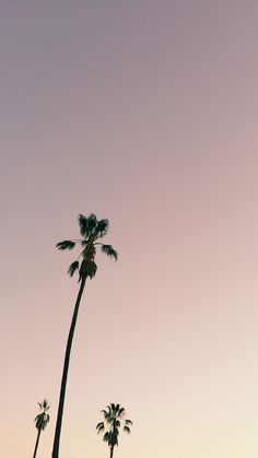 west elm - Los Angeles Mobile Wallpaper by Jessica Comingore