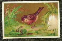 Little Bird & Frog Staring at Each Other Victorian Stock Trade Card Gilded