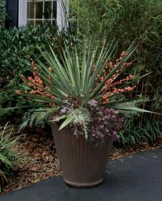 Wonderful Winter Containers: Celebrate the season by using hardy plants and fresh-cut boughs | Fine Gardening