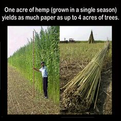 hemp production vs trees - and the quality of the hemp paper is excellent.