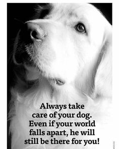 Dog And Puppies Golden Retriever .Dog And Puppies Golden Retriever I Love Dogs, Cute Dogs, Funny Dogs, Animals And Pets, Cute Animals, Jungle Animals, Dog Quotes Love, Funny Quotes, Quotes On Dogs