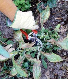 Preparing Your Garden for Winter  simple tips