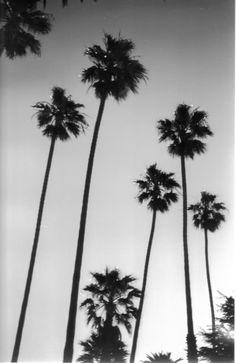 black and white palm trees tumblr - Google zoeken