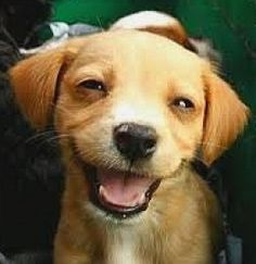 Who says animals don't laugh
