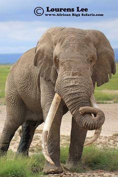 Elephant, African Wildlife, African Photography, African Big5 Safaris, Lourens Lee