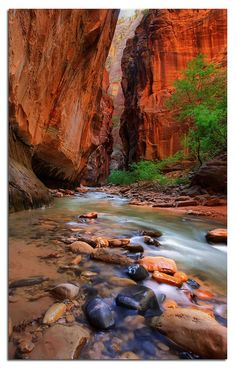 Narrows in Zion NP, Utah  Hike this with the family every summer. :)
