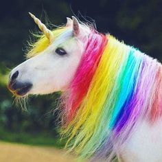 The Web's Unicorn Gift Store. Anything you can think of that might have a Unicorn on it; Unicorn Fantasy, Real Unicorn, Unicorn Horse, Magical Unicorn, Cute Unicorn, Rainbow Unicorn, Unicorn Pictures, Baby Animals Pictures, Cute Animal Pictures