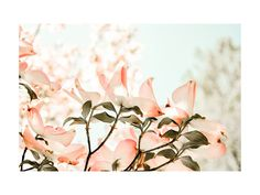 reaching for the sky by Qing Ji for Minted