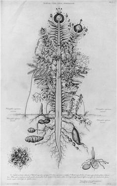 The Plant Archetype by P.J.F. Turpin Appeared in an 1837 Edition of Goethe's Works on Natural History Published in France (Goethe, 1837)