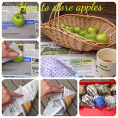 How to store apples, Storing apples, harvesting apples, storing apples over winter,when to pick apples When To Pick Apples, How To Store Apples, Apple Garden, Canning Food Preservation, Apple Season, Apple Harvest, Tea Cakes, Canning Recipes, Winter Garden