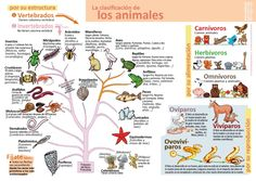 Infografías de Ciencias Naturales – aulaciclo3 Diy Phone Case Design, Spanish Teaching Resources, Science, Green Life, Interactive Notebooks, Funny Animal Pictures, Projects For Kids, Biology, Homeschool