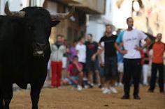 A local Spanish bull run - Puçol, Spain in the region of Valencia - Comunidad Valenciana