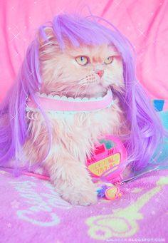 Fairy Kei Kitty!! Rwar. This just makes me giggle. Princess Peach, Mario, Cats