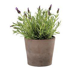 Ikea ps 2014 piedistallo per piante ikea ikea - Portacoperchi ikea ...