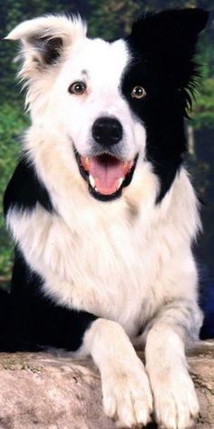 Cute Dog Pictures, Beautiful Dogs, Dog Friends, Cute Dogs, Husky, Corgi, Puppies, Animals, Corgis
