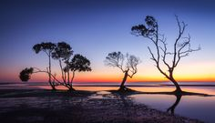 Beachmere Trees by Gerry Allen - Photo 124651477 - 500px