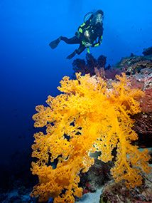 Dive the Great Barrier Reef & Coral Sea. Experience world class liveaboard diving at Cod Hole, Osprey Reef, and the Ribbon Reefs on board Spirit of Freedom. Great Barrier Reef, Cairns, Scuba Diving, Horn, Destinations, Bucket, Tropical, Sea, Diving