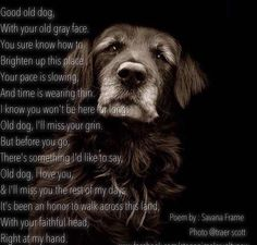 Old Dogs are such beautiful souls!!