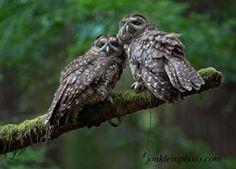 Wildlife | Jon Klein Wildlife and Nature Photography | Jon Klein