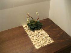 растения в ванной - Поиск в Google