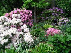 Skylands woodland gardens