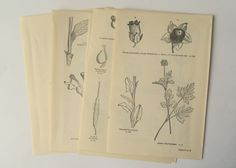 1930s plant diagrams and illustrations. 20 double sided book pages. Vintage botanical paper for craft, decoupage, collage, framing.