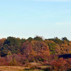Amazing colours! #favoriteseason #beautyaroundthecorner #colour #colors #fall #autumn #nature #trees #landscape #instagood #bluesky #oostvoorne #netherlands #dutch #beautyiseverywhere