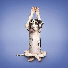 yoga pets | animales-perros-haciendo-yoga-pets-dogs-1.jpg