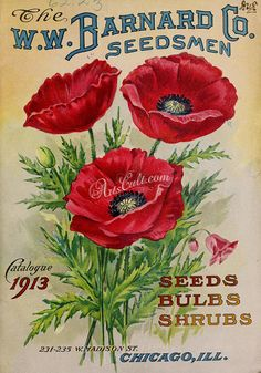seeds_catalogs-01058  Poppy papaver three red flowers digital