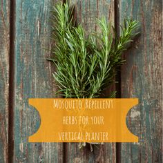 What better way to keep mosquitoes at bay the natural way than with herbs!   #pinoftheday #verticalherbgarden
